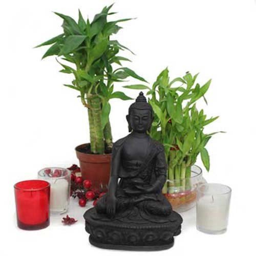 Buddha N Lucky Bamboo Plants
