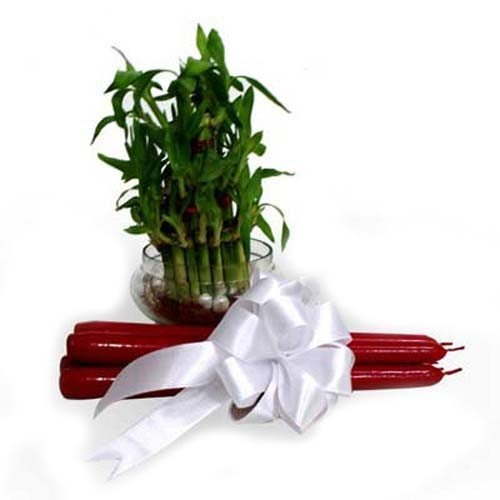 Lucky Bamboo With Candles
