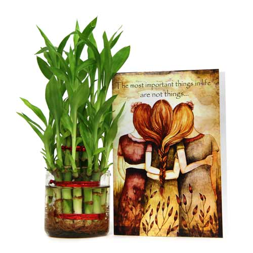 Lucky Bamboo n Greeting Card