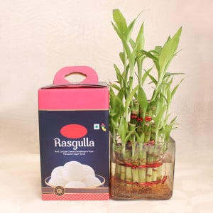 Lucky Bamboo with Rasgulla
