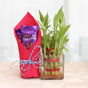 2 Layer Lucky Bamboo with Silk