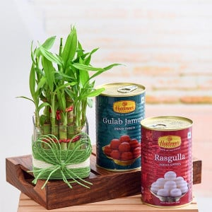Celebrate Happiness with 2 Layer Lucky Bamboo and Sweets