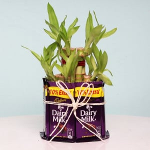 Charming 2 Layer Bamboo Plant