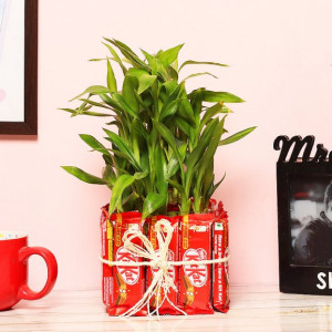 Attractive 3 Layer Bamboo Plant